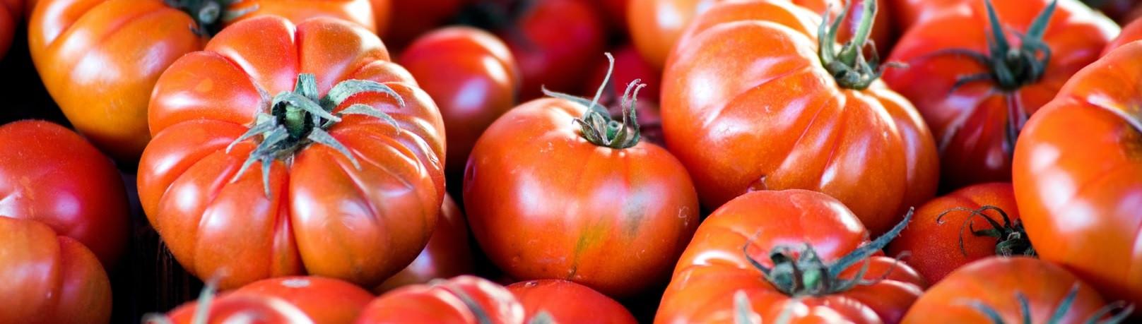 Merinda Tomaten aus dem Tessin